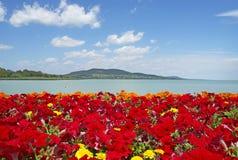 balaton美好的湖全景 免版税库存图片