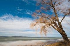 Balaton im Winter Stockfoto