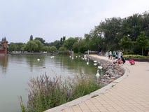 Balaton shore, peoples, water stock image