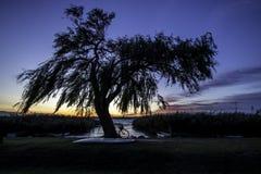 Balaton solnedgång Royaltyfri Foto