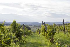 Balaton uplands Stock Photography