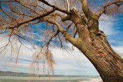 Balaton in winter Stock Photo