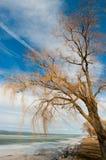 Balaton in winter Royalty Free Stock Photos