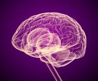 Balayage de rayon X de cerveau Images libres de droits