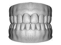Balayage dentaire de mâle adulte Images stock