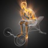 Balayage humain de radiographie dans la chambre de gymnastique Image stock