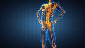 Balayage humain de rayon X de radiographie d'épine illustration de vecteur