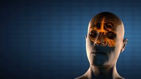 Balayage réaliste de radiographie d'esprit humain illustration stock