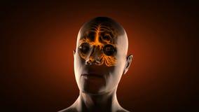 Balayage réaliste de radiographie d'esprit humain illustration de vecteur
