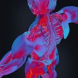 balayage thermique de l'anatomie 3D humaine Images stock