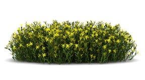 Balayez les fleurs d'isolement sur le blanc Image stock