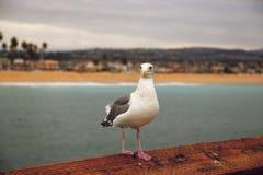 Balboa wyspa obraz stock