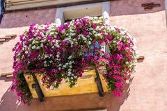 Balcão florescido foto de stock royalty free