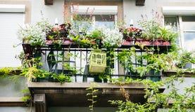 Balcão francês com as flores múltiplas em uns potenciômetros fotos de stock royalty free