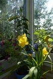 Balcão greening Jardim urbano pequeno com as plantas decorativas em uns potenciômetros de flor imagens de stock royalty free