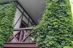 Balcón de madera del edificio cubierto con la hiedra verde Imagenes de archivo