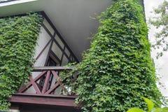 Balcón de madera del edificio cubierto con la hiedra verde Fotos de archivo