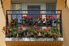 Balcón negro del hierro con las macetas y las flores rojas Imagen de archivo