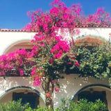 balcões da casa decorados com flores, plantas verdes Foto de Stock