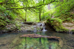 Balch Creek along Wildwood Trail Stock Image