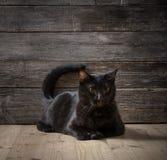Balck cat on dark wooden background Royalty Free Stock Photos