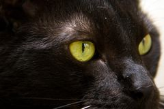 Balck cat, Green eye Stock Photos