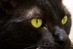 Balck cat, Green eye. Black cat with bright green eyes, close-up stock photos