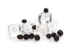 Balckberry con il cubo di ghiaccio fotografia stock libera da diritti