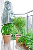 Balcone dei vasi delle piante di fragola dei rosmarini del pomodoro Immagine Stock