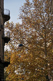 Balconies and autumn tree stock photography