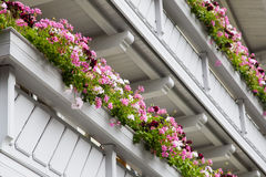 Balconies with Geranium flowers Stock Image