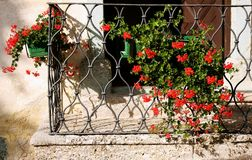 Balcony. Flower,grill,red,green,plent Stock Photo