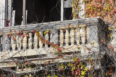 Balcony of abandoned house with climbing plant in autumn stock photography