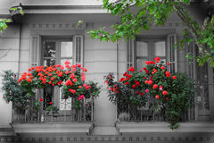 Free Balcony And Flowers Stock Photography - 19584172
