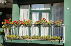 balcony with blooming geranium  flowers Royalty Free Stock Image