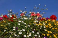Balcony with colorful summer flowers -  geranium, yellow bidens Stock Photo