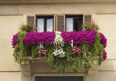 Balcony decorated with flowers petunias Royalty Free Stock Image