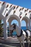 Balcony of Europe, Nerja, Andalusia, Spain. Horse drawn carriages along the Balcony of Europe (Balcon de Europa), Nerja, Costa del Sol, Malaga Province Stock Photography