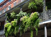 Balcony Fern Garden Royalty Free Stock Photography