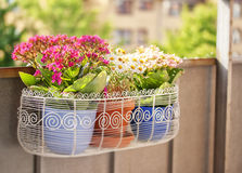 Balcony flower box Royalty Free Stock Photos