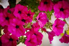 Balcony flowers Royalty Free Stock Photos