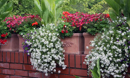 Balcony flowers royalty free stock images