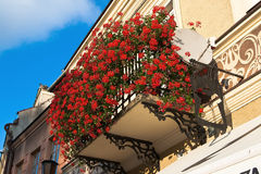 Balcony with flowers Geranium Royalty Free Stock Images