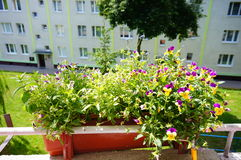 Balcony flowers Royalty Free Stock Photography