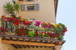 Balcony with flowers. Balcony with a variety of flowers Stock Image