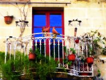 The Balcony Garden, Valletta. This beautiful balcony garden is located in the capital city of Valletta in Malta. Set against the limestone building the colors of stock photos