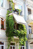 Balcony with grape leaves Stock Photos