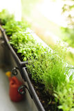 Balcony herb garden. Fresh herbs growing in window boxes on bright balcony royalty free stock photos