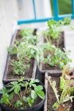 Balcony herbal garden Stock Photo