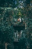Balcony with overgrown greenery stock photos
